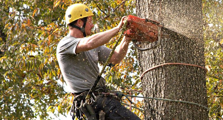 Is it time you need Tree Removal Services? Read this before you get Started!